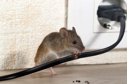 Pest Control in Downside, Cobham, Stoke d'Abernon, KT11. Call Now! 020 8166 9746