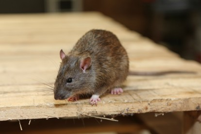 Pest Control Downside. Call Now 020 8166 9746
